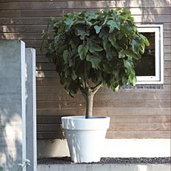 Elho Pure Round bloempot-antraciet-∅ 120 cm